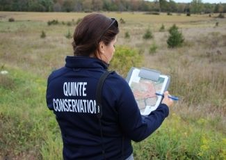 A female Quinte Conservation staff member, stand in a field, looking at a map.