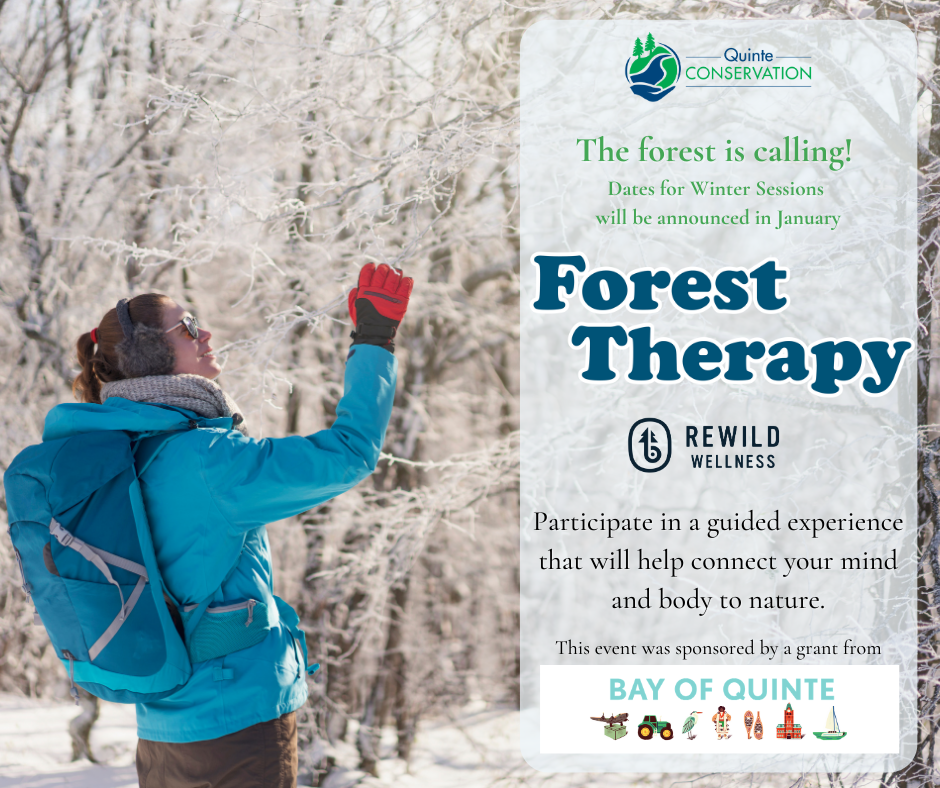 2021 Winter Forest Therapy Sessions